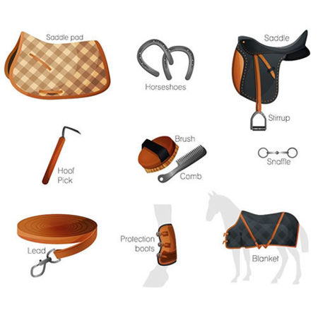 Picture for category EQUESTRIAN